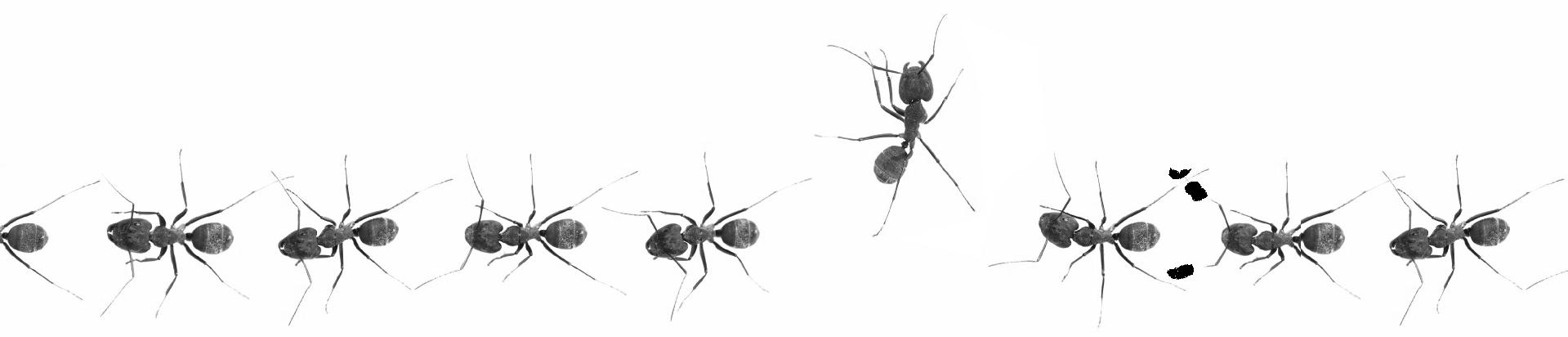 mieren onder